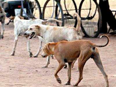 Plea in HC seeks to link dog bite to human rights