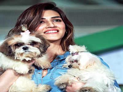 Kriti's puppy love