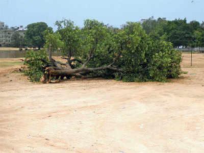 Here's why rains make tree-mendous impact