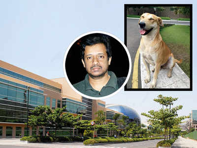Techie alleges Infosys fired him for protecting stray dogs on campus