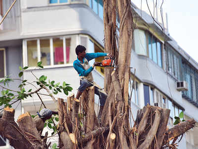Do khoon maaf: Tree-pruning contractors can get away with two violations