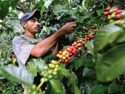 Karnataka coffee planters reel under Covid, heavy rains