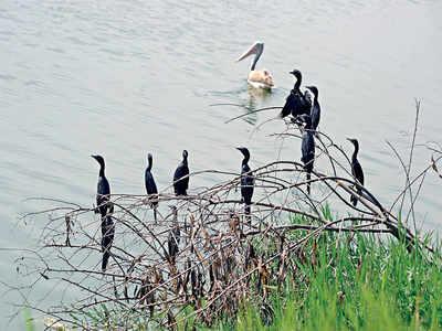 Denmark's Lake Knud becomes Tumakuru's 'Bheemasandra Lake'