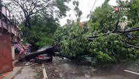 Trees uprooted in pune due to heavy rains and strong wind