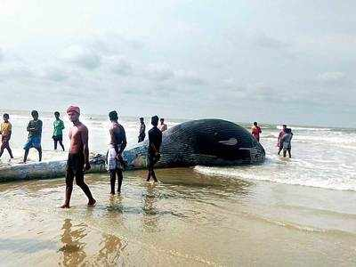 Whale carcass washes ashore Bengal beach