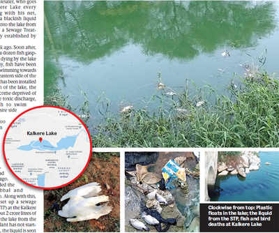 Smell something fishy at Kalkere Lake? It's death