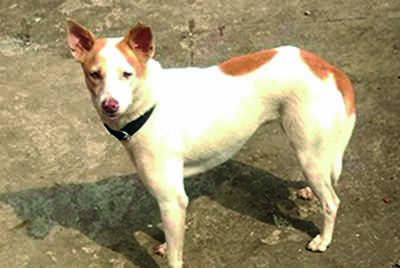 Karnataka: Mangaluru finds its cutest puppy finalist; it's Pinky