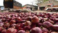 Nafed invites bids from importers for supply of 15,000 tonnes of red onions