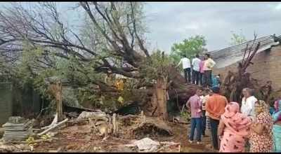 Tauktae Cyclone: 2 dead, 1 injured after tree falls on hut in Maharashtra's Jalgaon