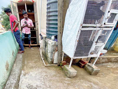 Shantinagar's peace stirred by cockfights, pigeon racing