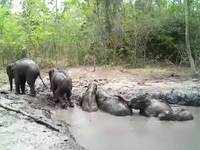 Thailand: Baby elephants rescued from sticky situation