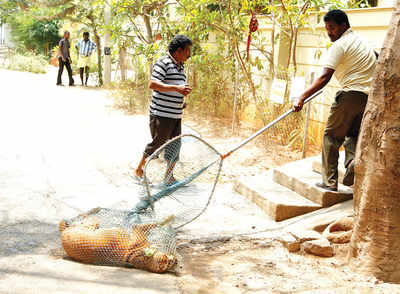 BBMP to do an Animal Birth Control in letter and spirit