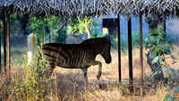 Chennai: Vandalur zoo ensures animals stay cool in summer