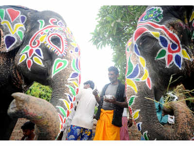 Assam activists protest plan to send 4 elephants to Ahmedabad for Jagannath Yatra