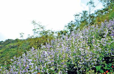 Flowering trees in bangalore dating