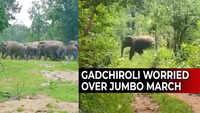 Watch: Gadchiroli has a jumbo problem...