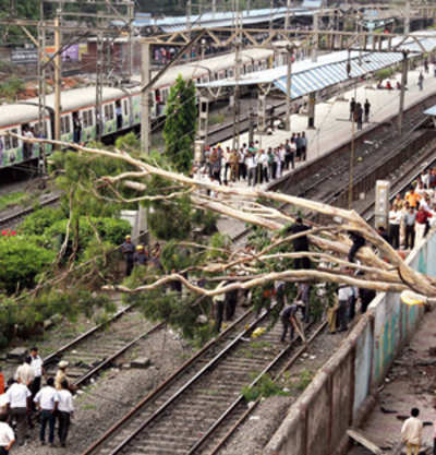 Tree collapse in Dadar hits train services