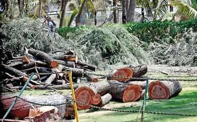 Mumbai: South Bombay loses green spot as BMC starts axing trees