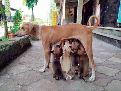 Society members throw 6'noisy' pups into ditch