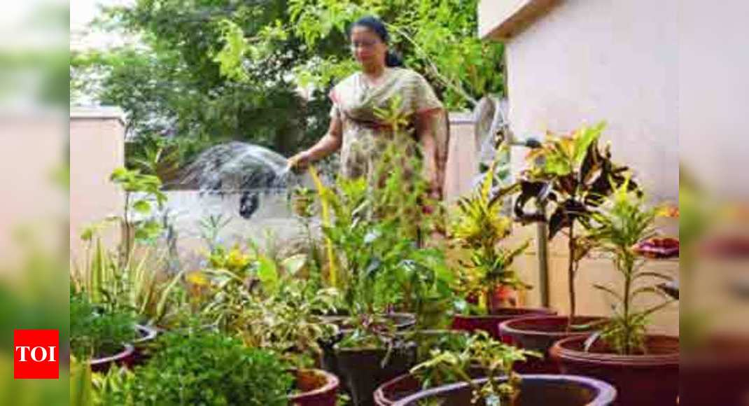 Gardening During The Monsoons Times Of India