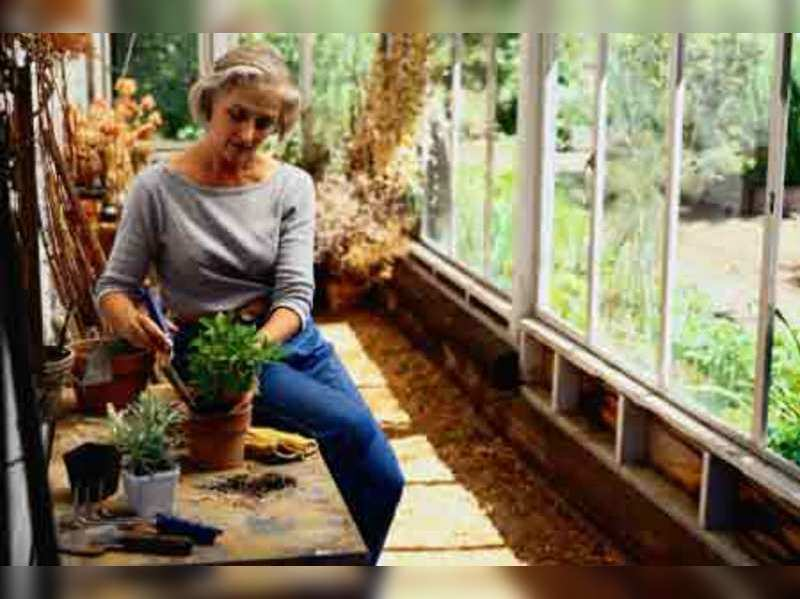 Learn to take care of indoor plants
