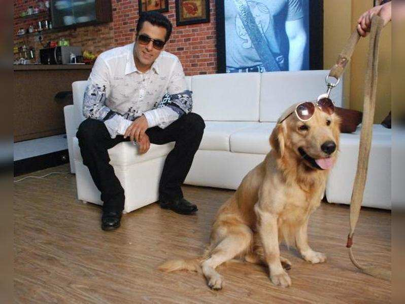 I love controversies: Heaven, the Bigg Boss house dog