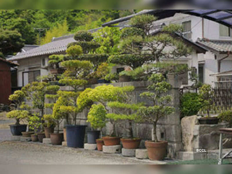 Beginners Guide To Bonsai Times Of India