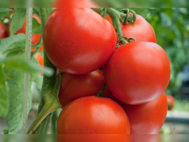 Tomatoes Health Benefits 5 Reasons You Should Eat Tomatoes How Tomato Is Good For Health