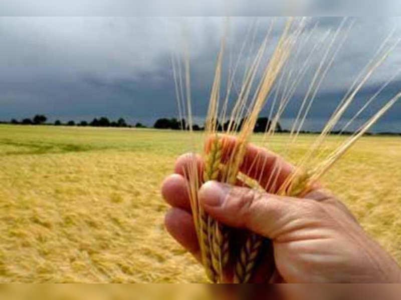 Amazing health benefits of barley