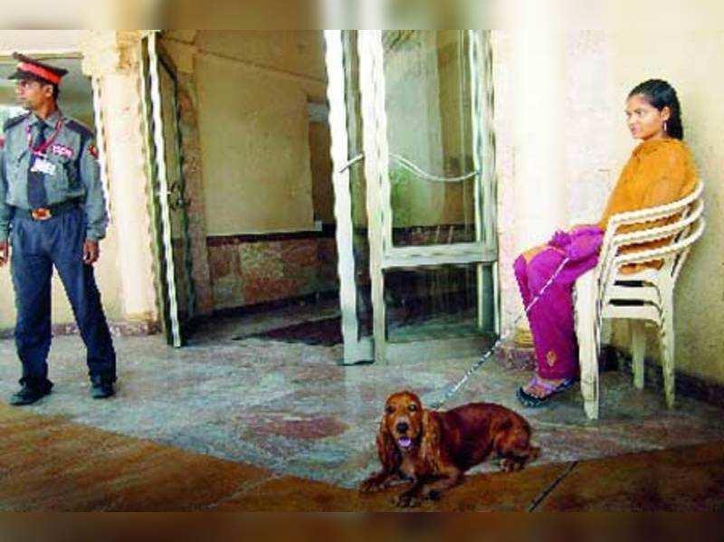 Mumbai's societies can no longer ban or mistreat pets