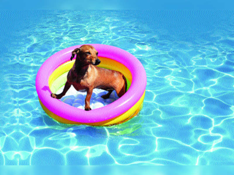 How pets cool off in summer
