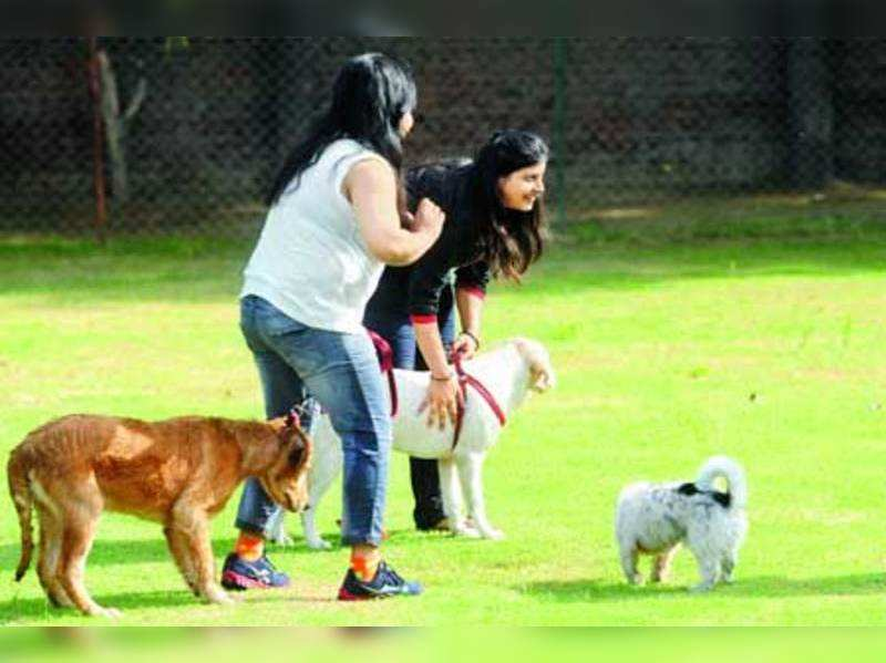 A daily battle faced by pet owners in Gurgaon