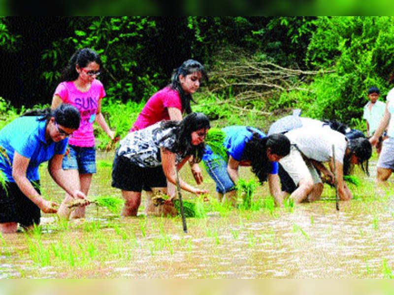 Chennaiites take to farming big time
