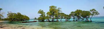 Sail through the mangrove creek