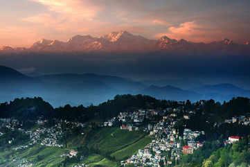 Sip fresh Darjeeling tea