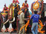 Dasara elephants arrive in Mysore