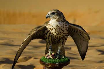 Feed the falcons