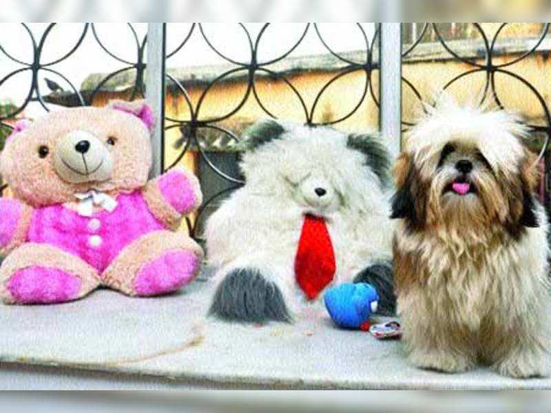 Holiday plans? Leave your pet in a creche!