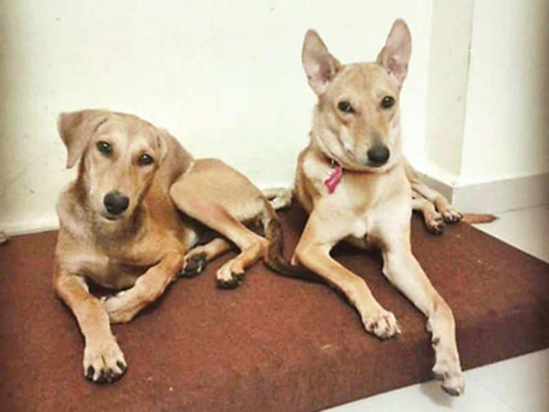 Animal lovers prefer stray dogs over pedigree