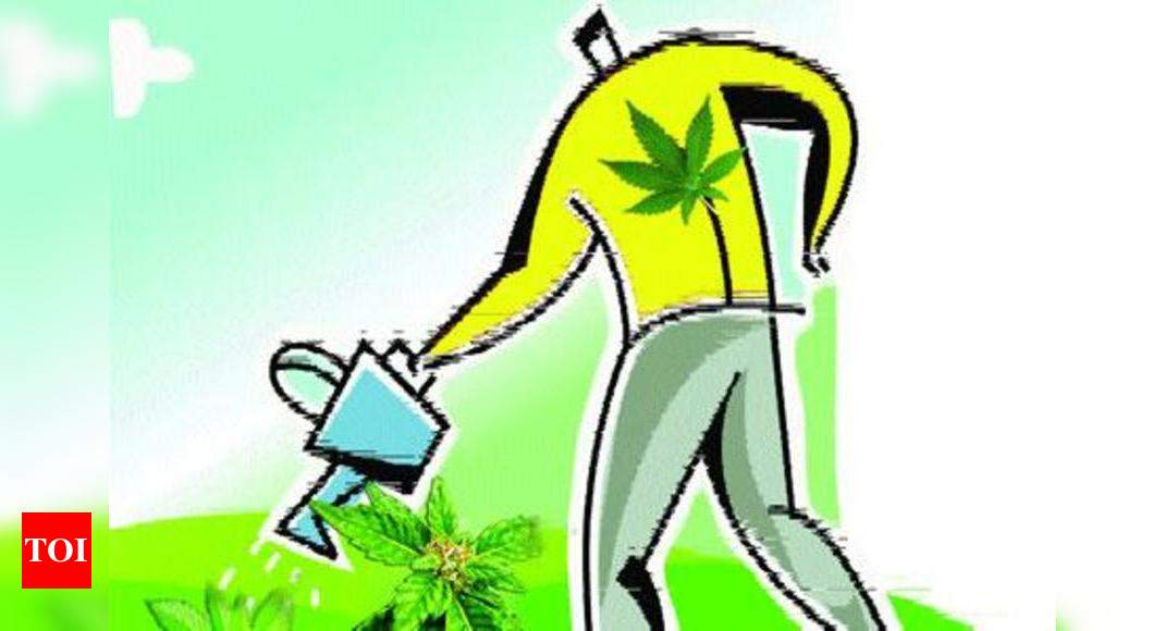Gardening App To Help Plant Seeds Of Green Love Times Of India