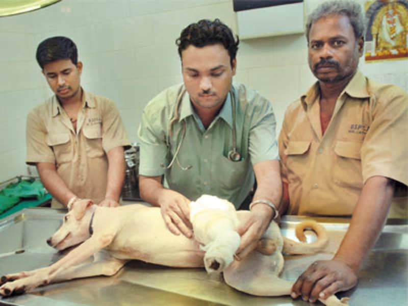 Vasant Kunj has the most animal abuse cases