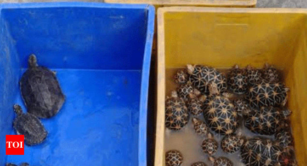 Threatened tortoises & turtles rescued from Kolkata, two held