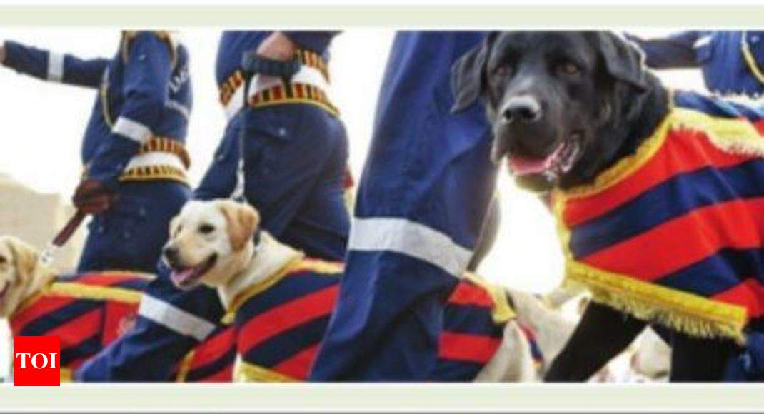 Want to guard your home? Adopt a retired police dog | Bengaluru News
