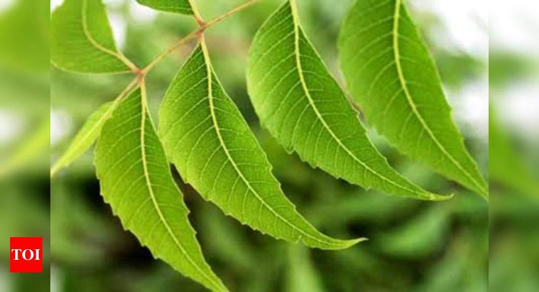 Man chops down neem tree, booked | Aurangabad News - Times of India