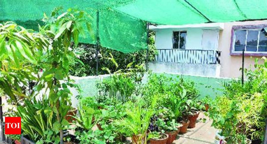 Lush green urban terrace gardens flourish here thanks to govt lush green urban terrace gardens flourish here thanks to govt intiative madurai news times of india solutioingenieria Images