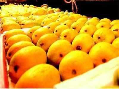 Mango export to the US up by 133%, record 765 metric tonnes sent