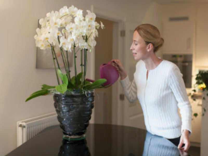 Orchids are a challenge to look after. You need a lot of patience. (Mark de Leeuw/Getty Images)