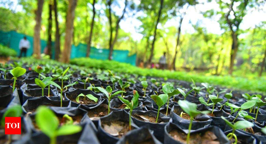 Engineer Realizes Green Dream With Nursery Business Hubballi News Times Of India