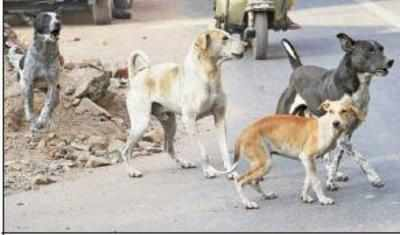Now, stray dogs are the new menace at airport | Surat News