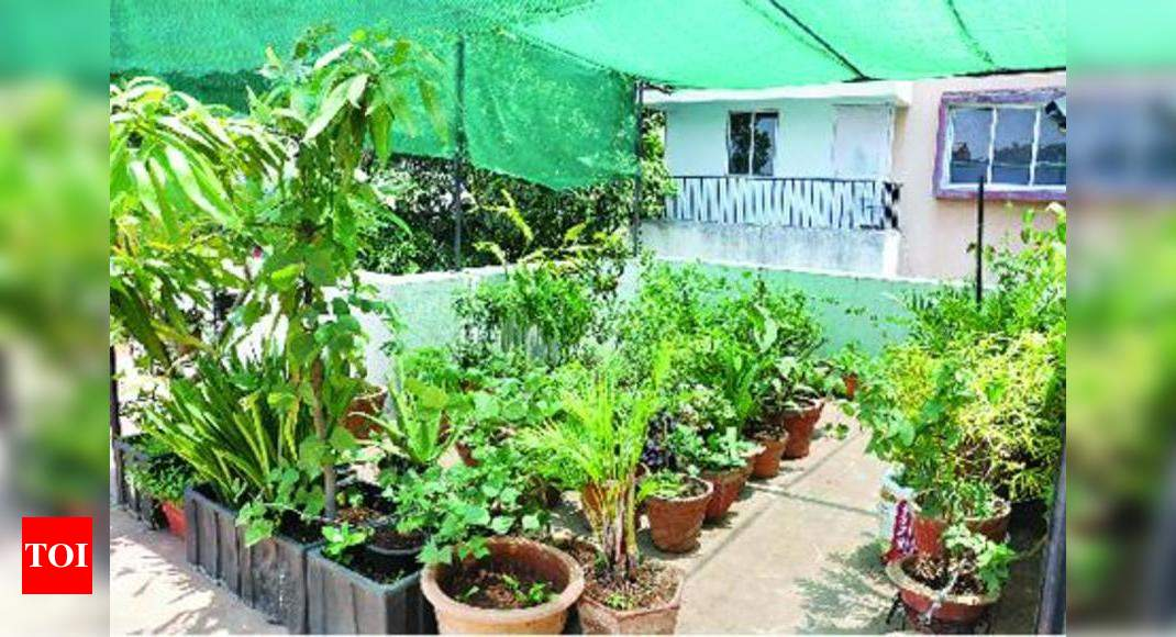Grow Your Own Vegetables On Terrace At Rs 500 A Month Thiruvananthapuram News Times Of India